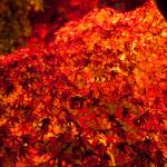 【11月の京都観光】紅葉狩りおすすめのスポットはココしかない!