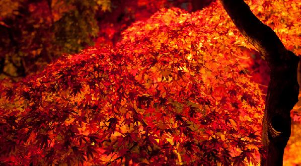 京都 観光 おすすめ 11月