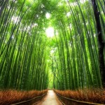 京都の嵐山へ行くならココ!【おすすめ観光 コース】