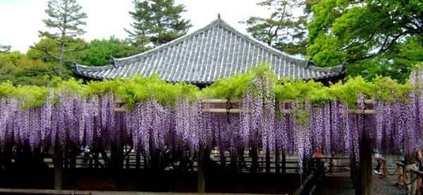京都の5月は花を堪能しようおすすめ観光スポット5選 京都