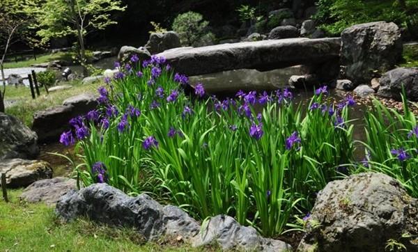 京都 観光 おすすめ 5月 花