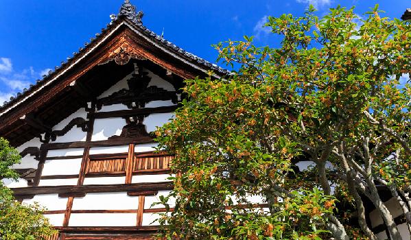 京都 観光 おすすめ 10月