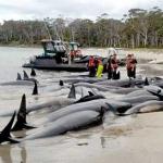 南海トラフ【地震前兆現象まとめ】動物の異常行動この8つが不気味・・・