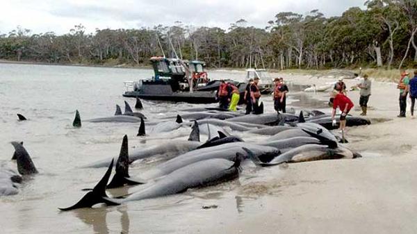 南海トラフ地震前兆 現象 まとめ 動物